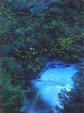 ゲンジボタルの生息する鵜川の豊かな自然
