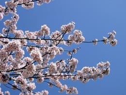 花粉症は大変だけど春です