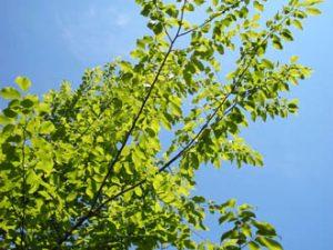 鮮やかな緑が心地よい